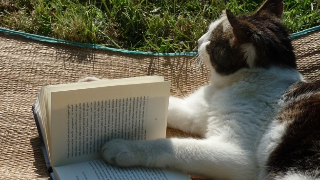 featured image of a cat reading in the park for my blog page